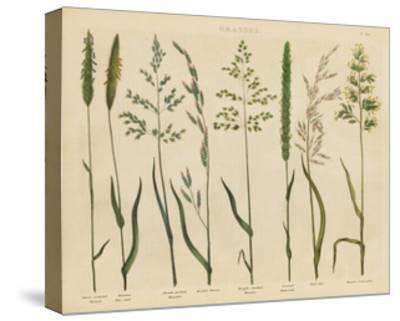Herbal Botanical VII-Wild Apple Portfolio-Stretched Canvas Print