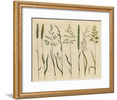 Herbal Botanical VII-Wild Apple Portfolio-Framed Art Print