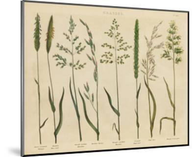 Herbal Botanical VII-Wild Apple Portfolio-Mounted Art Print