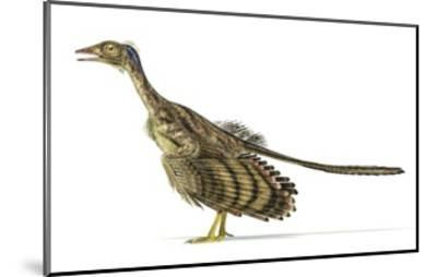 Archaeopteryx Dinosaur, Artwork--Mounted Art Print