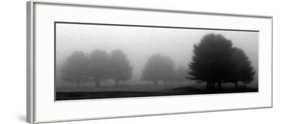 Trees in Fog I-Mary Woodman-Framed Photographic Print