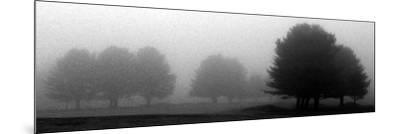 Trees in Fog I-Mary Woodman-Mounted Photographic Print