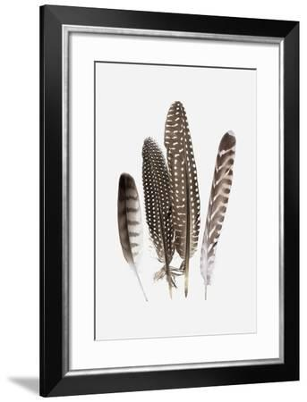 Feathers II-PI Studio-Framed Art Print