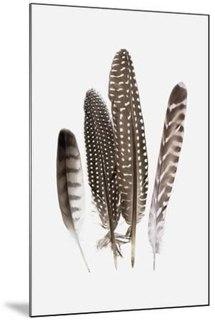 Feathers II-PI Studio-Mounted Art Print