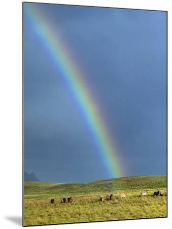 Rainbow Above Icelandic Horses-Babak Tafreshi-Mounted Photographic Print