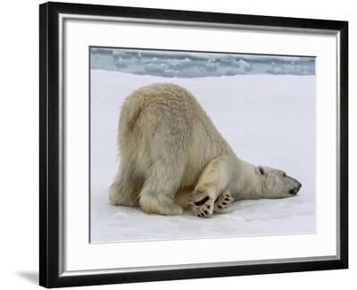 A Lone Polar Bear on Ice Floe-Jay Dickman-Framed Photographic Print