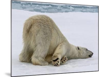 A Lone Polar Bear on Ice Floe-Jay Dickman-Mounted Photographic Print