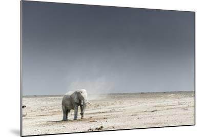 African Elephants, Loxodonta Africana, Standing with Dust Devil in the Background-Chris Schmid-Mounted Photographic Print
