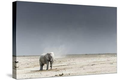 African Elephants, Loxodonta Africana, Standing with Dust Devil in the Background-Chris Schmid-Stretched Canvas Print