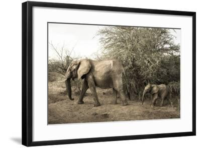A Mother and Baby African Elephant, Loxodonta Africana, in Samburu National Reserve-Robin Moore-Framed Photographic Print
