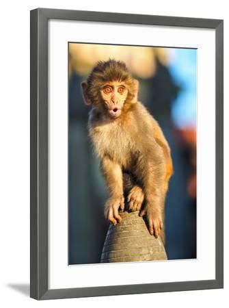Young Monkey Sitting in Swayambhunath Monkey Temple-Marcin Dobas-Framed Photographic Print