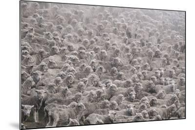 Herd of Sheep from South Island-Marcin Dobas-Mounted Photographic Print