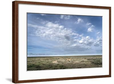 Two Lionesses, Panthera Leo, Resting on the Open Plains in Serengeti National Park-Chris Schmid-Framed Photographic Print