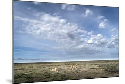 Two Lionesses, Panthera Leo, Resting on the Open Plains in Serengeti National Park-Chris Schmid-Mounted Photographic Print