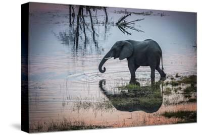An Elephant Walks Along the Boteti River in Botswana's Makgadikgadi Pans-Cory Richards-Stretched Canvas Print