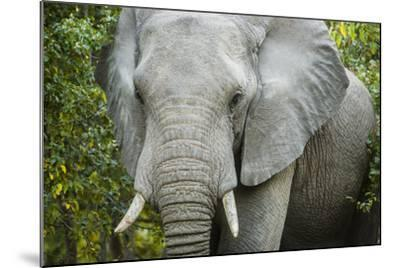 An Elephant in the Okavango Delta-Mark Stone-Mounted Photographic Print