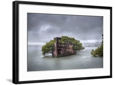 An Abandoned Steamship Sitting in Homebush Bay with Coastal Trees Growing in the Hull-Doug Gimesy-Framed Photographic Print