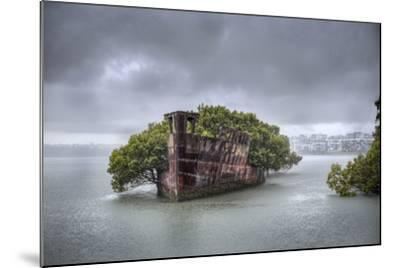 An Abandoned Steamship Sitting in Homebush Bay with Coastal Trees Growing in the Hull-Doug Gimesy-Mounted Photographic Print