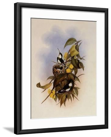 White-Throat, Leucochloris Albicollis-John Gould-Framed Giclee Print