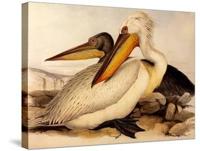 Dalmatian Pelicans, Pelecanus Crispus-Edward Lear-Stretched Canvas Print