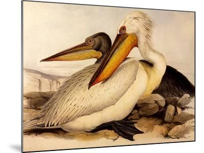 Dalmatian Pelicans, Pelecanus Crispus-Edward Lear-Mounted Giclee Print