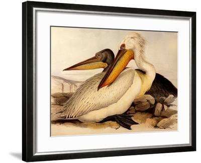 Dalmatian Pelicans, Pelecanus Crispus-Edward Lear-Framed Giclee Print