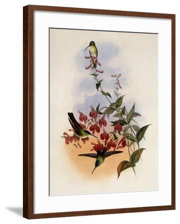 Francia's Azure-Crown, Cyanomyia Franci�-John Gould-Framed Giclee Print