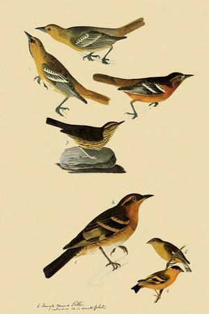 Perching Birds-John James Audubon-Framed Giclee Print