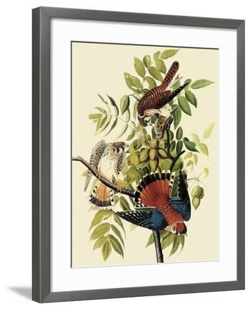 Sparrow Hawks-John James Audubon-Framed Giclee Print