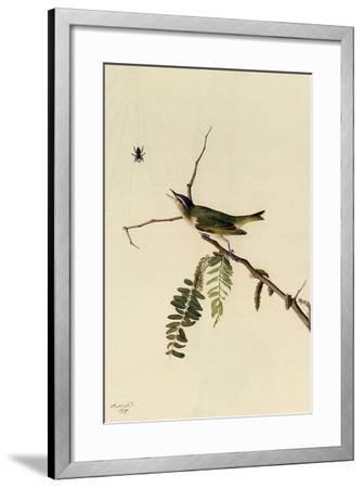 Red-Eyed Vireo-John James Audubon-Framed Giclee Print