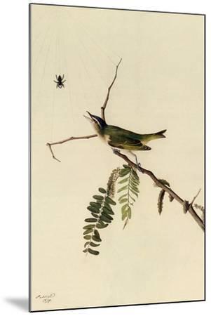 Red-Eyed Vireo-John James Audubon-Mounted Giclee Print