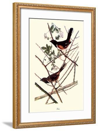 Towhee-John James Audubon-Framed Giclee Print