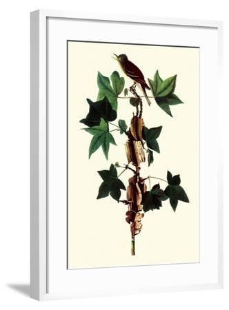 Alder Flycatcher-John James Audubon-Framed Giclee Print