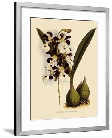 Epidendrum Atropurpureum-John Nugent Fitch-Framed Giclee Print