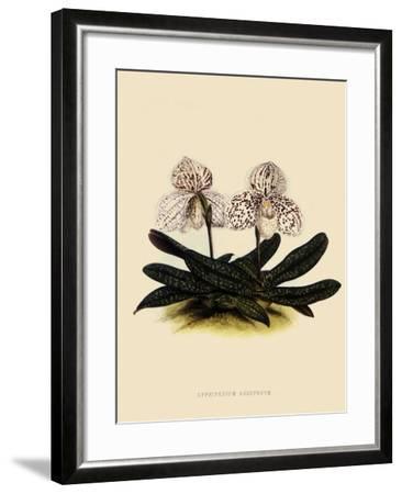 Cypripedium Godefroyae-John Nugent Fitch-Framed Giclee Print