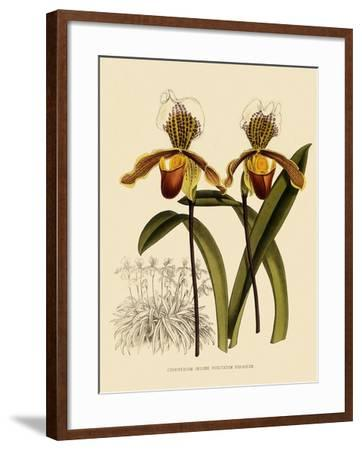 Cypripedium Insigne Punctatum Violaceum-John Nugent Fitch-Framed Giclee Print