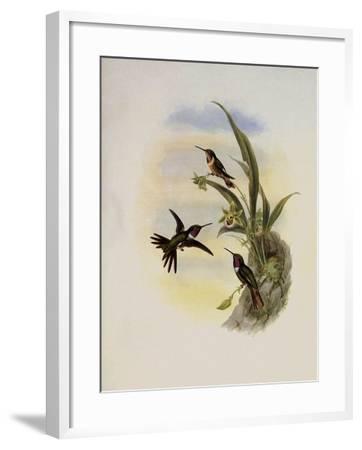 Bryant's Wood-Star, Doricha Bryant�-John Gould-Framed Giclee Print