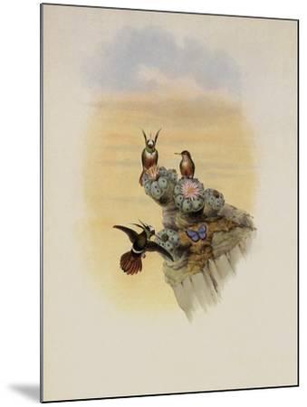 Salvin's Coquette, Lophornis Adorabilis-John Gould-Mounted Giclee Print