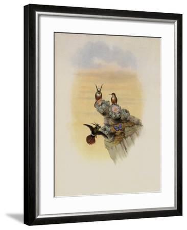 Salvin's Coquette, Lophornis Adorabilis-John Gould-Framed Giclee Print