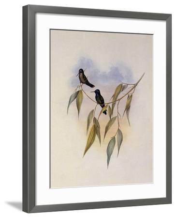 Guimet's Flutterer, Klais Guimeti-John Gould-Framed Giclee Print