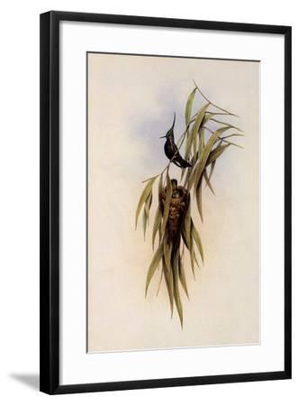 De Lalande's Cephalepis Delalandi-John Gould-Framed Giclee Print