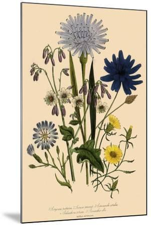 Viper Grass and Others--Mounted Giclee Print