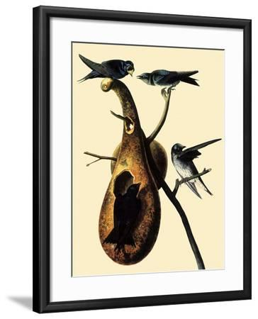 Purple Martins-John James Audubon-Framed Giclee Print