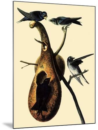 Purple Martins-John James Audubon-Mounted Giclee Print