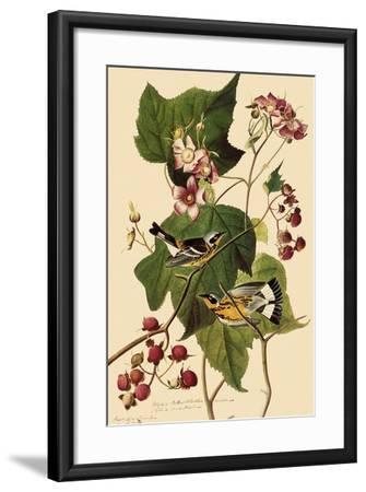 Magnolia Warblers-John James Audubon-Framed Giclee Print