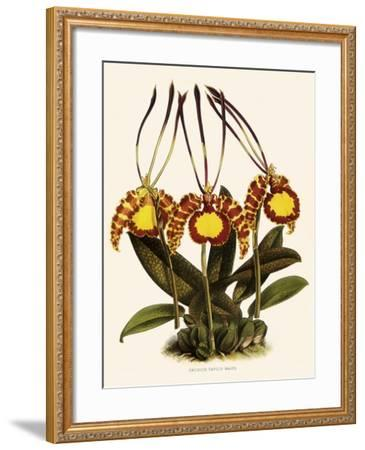 Oncidium Papilio-John Nugent Fitch-Framed Giclee Print