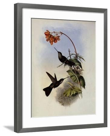 C�ligene, C�ligena Typica-John Gould-Framed Giclee Print
