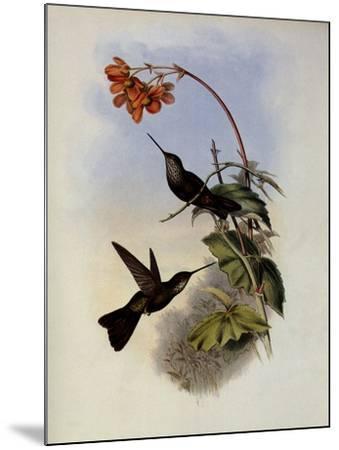 C�ligene, C�ligena Typica-John Gould-Mounted Giclee Print