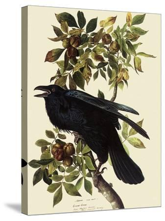 Common Raven-John James Audubon-Stretched Canvas Print