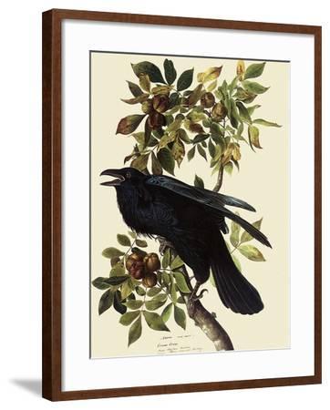Common Raven-John James Audubon-Framed Giclee Print